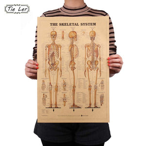 The Skeleton of The Body Structure Nervous System Poster on Retro Kraft Paper  42x29cm Wall Sticker