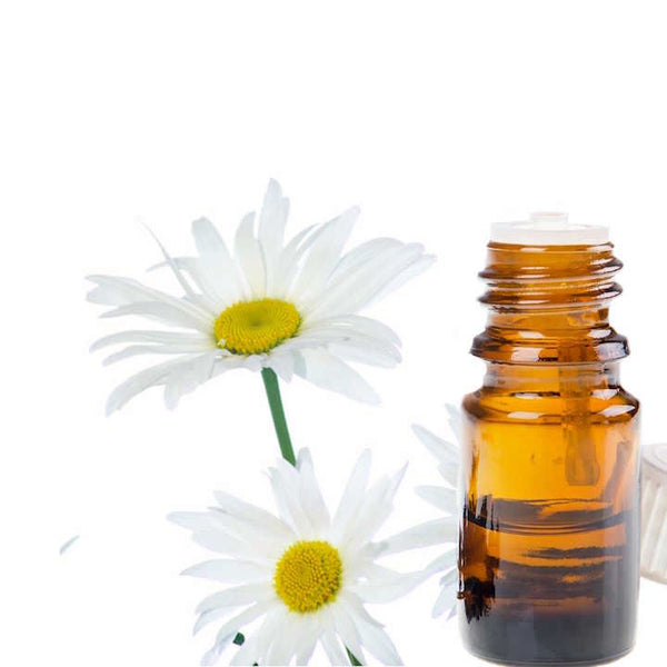 Two white Roman Chamomile flowers next to a bottle of essential oil