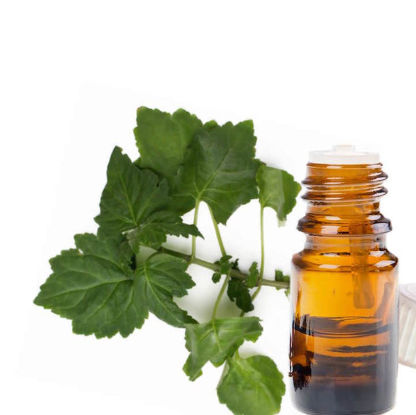 Patchouli Leaves next to a bottle of essential oil