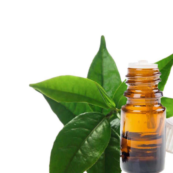Essential oil bottle next to Tea Tree leaves.