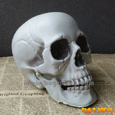 Realistic Plastic Skull, scary Halloween decoration