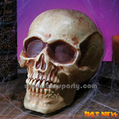Realistic Plastic Skull for Halloween decoration