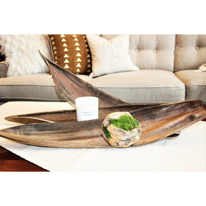 Natural Coco Boats (Set of 3)