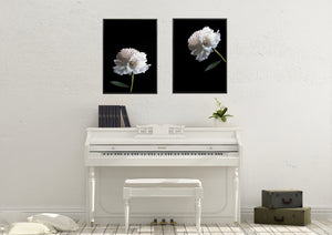 Wall Art - White Peony on Black No.1  (A-299)