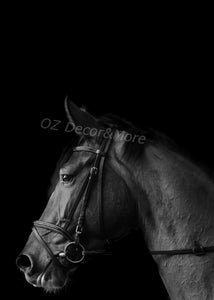 Wall Art - B&W Horse  (A-682b)