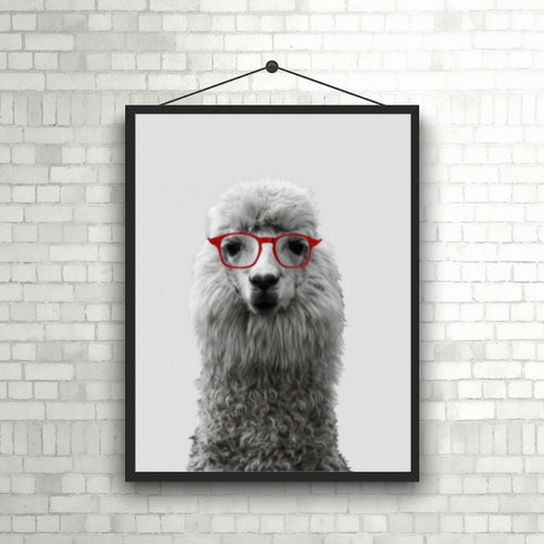 Wall Art - Llama wearing Glasses  (A-680a)