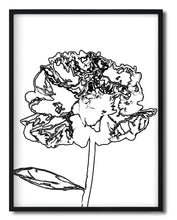 Wall Art - Black mixed art peony Line Sketch illustration - Framed / unframed art print (A-724)