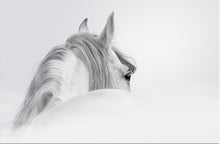 Wall Art - Black & White Horse print on Canvas (A-83)