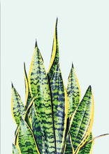 Wall art- Cactus & Snake Plant print -(A-242)