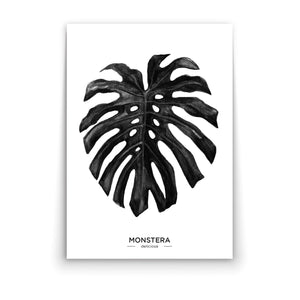 Wall art-Monochrome Monstera Leaf -(A-395)
