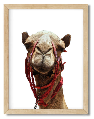 Wall Art -  Camel - Framed / unframed art print (A-488)