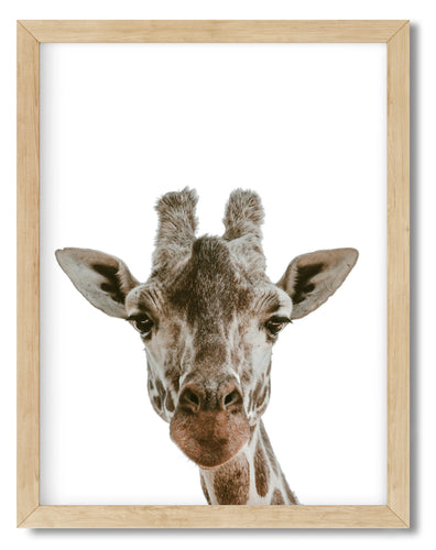 Wall Art - Jo The Giraffe - Framed / unframed art print (A-330)