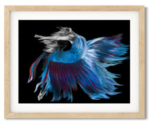 Wall Art- She Who Turns Into Fighting Fish  -The Transformation Series - Framed / unframed art print (A-473)