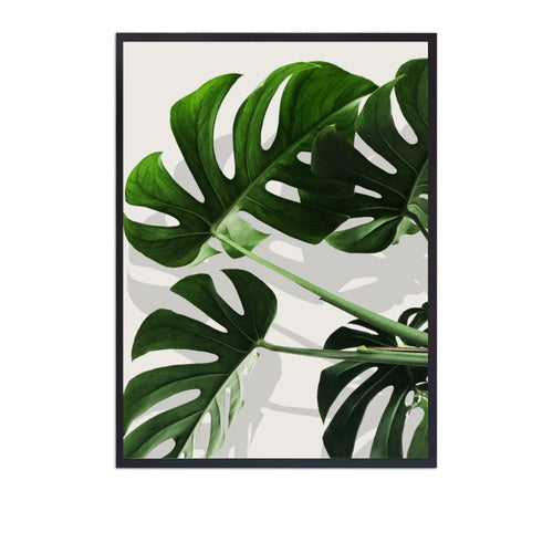Wall Art -   Monstera Leaves Illustration  (A-695)
