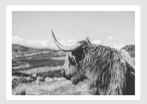 Wall Art - The Highland cow B&W (A-281)