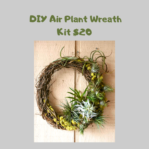 DIY Airplant Wreath Kit