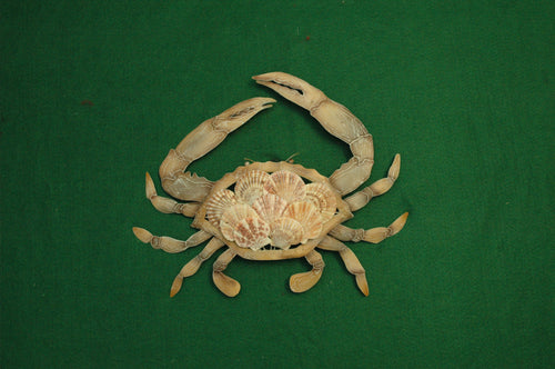 Sea Shell and Metal Crab Wall Hanging