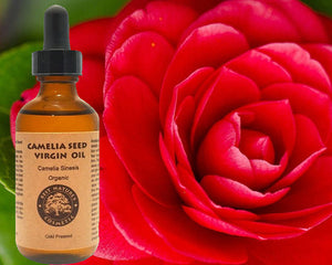 Camellia Seed Oil (Organic, Cold Pressed) for