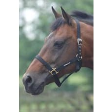 Cottage Craft Headcollar Standard - Pony / Black