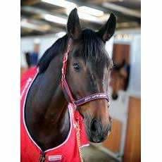 Whitaker Headcollar Padded Fleece - Pony / Red/navy