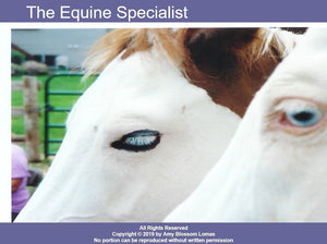 Equine Specialist: Roles, Boundaries, and Ethical Considerations