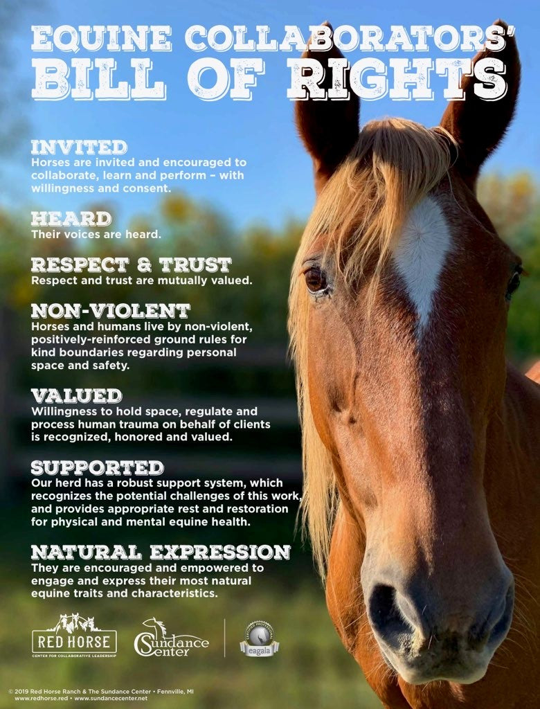 Equine Collaborators' Bill of Rights (18x24)