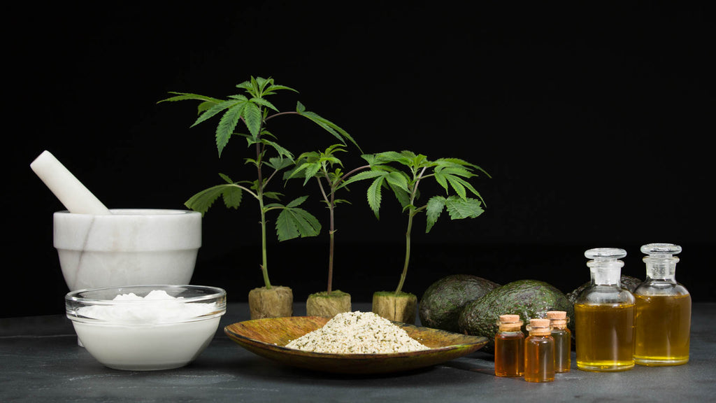 What Is CBD Used For? Is it Healthy?