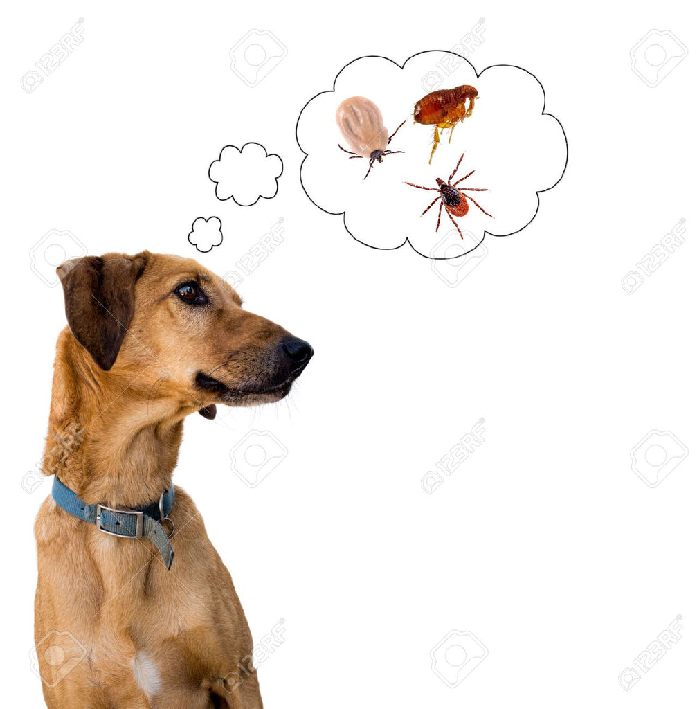 Natural Flea, Tick, & Mosquito Prevention- THAT REALLY WORK!