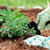 brown-mulch-pet-safe-1