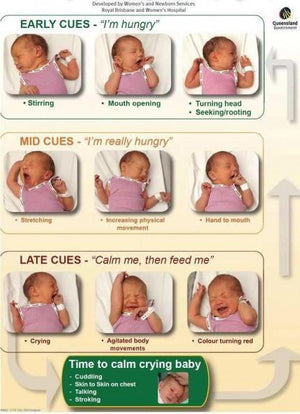 Your Baby's Breastfeeding Cues