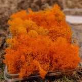 Magic Coloured  Lichen for - Art Works, Crafts work , with amazing Acoustic  properties