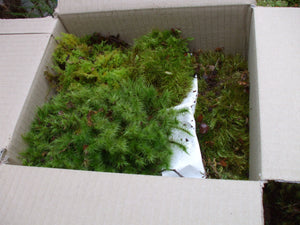 Decorative Moss - Medium Box