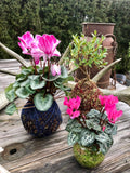 Kokedama Starter Kit - 15% OFF - now $25.00