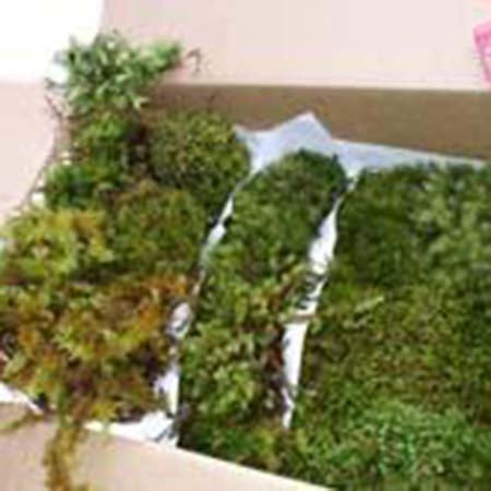 Decorative Moss - Large Box
