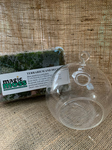 Terrarium Starter kit and Glassware Combo