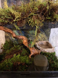 Frog and Reptile Moss