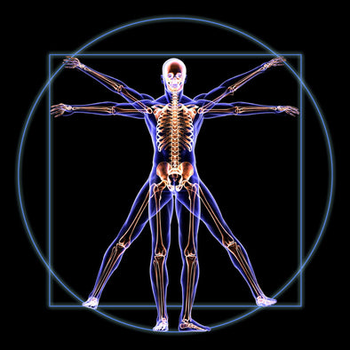 Anatomy and Physiology/Human Biology Online Course