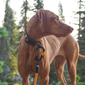 Waterproof Mammoth Collar