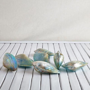 Blue Cabibe Shells