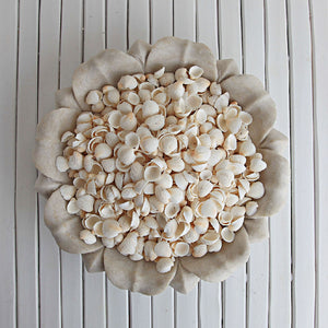 White Clam Rose Shells 200g