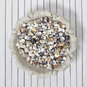 Mixed Small Shells 200g