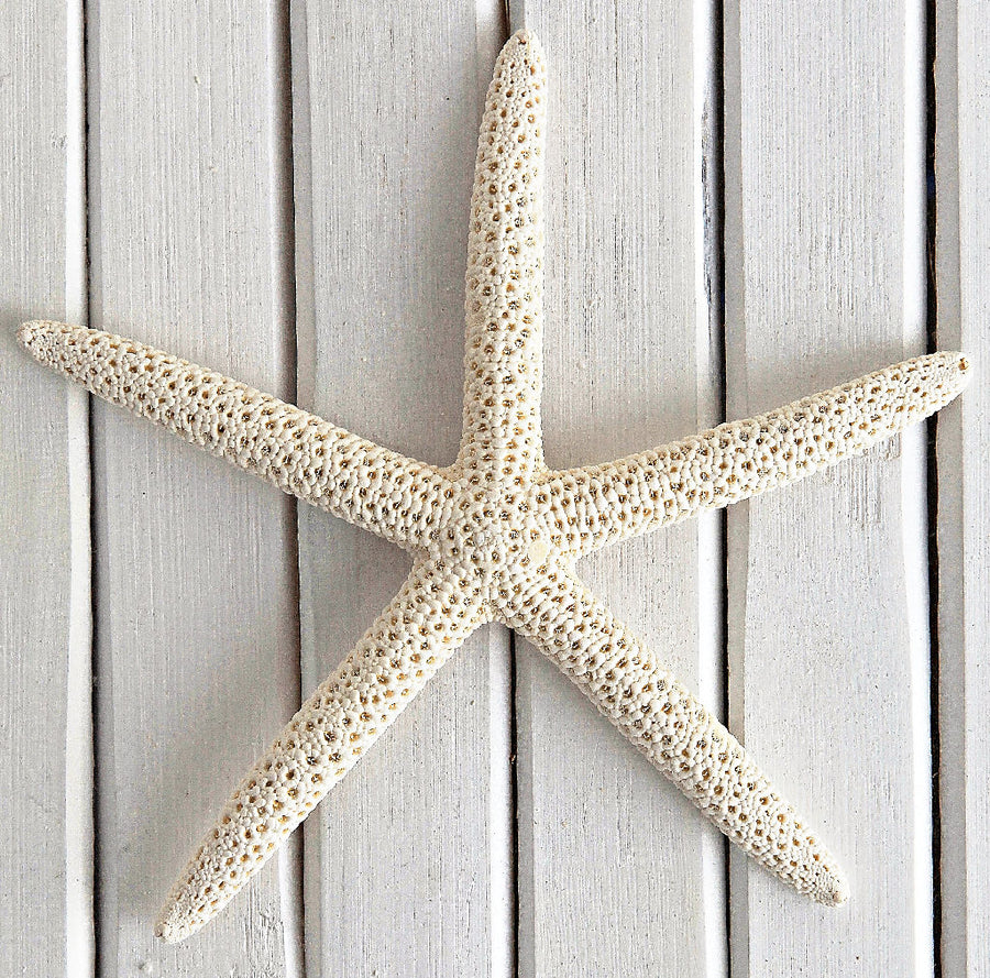 White/Cream Finger Starfish 10cm x 13cm (PK 6)
