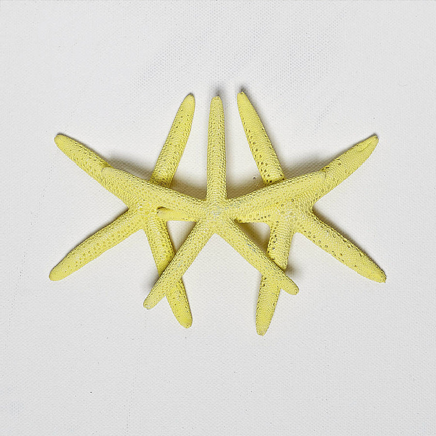 6 Yellow Finger Starfish 10cm-13cm