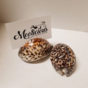 Tiger Cowrie Shells Card Holder