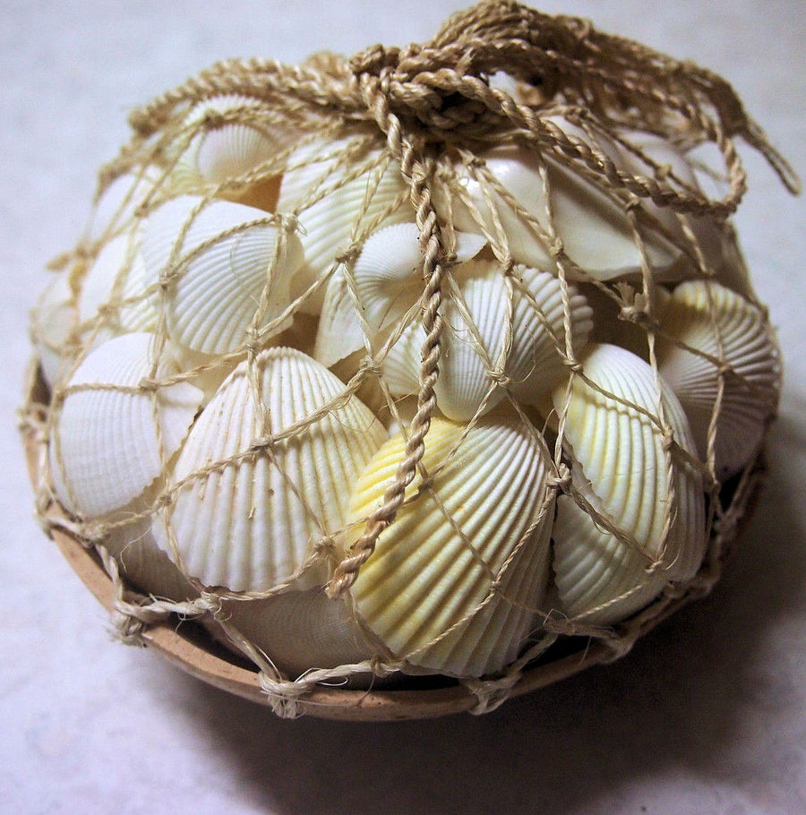 White shells Coconut Pack