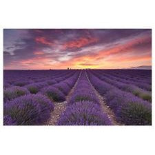 Jigsaw Puzzle 100 Pieces - Sunrise over Lavender