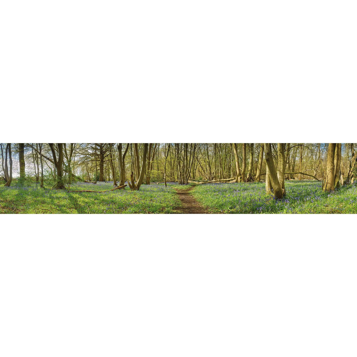 Wall Acoustics Full Size Mural Muffle Mural - Wayland Wood Bluebells Full Size Mural