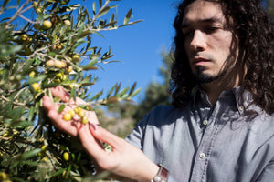 ed'o the gold essence Erhan Turkoglu careful selection of Arbequina olives hand picking on optimal maturity level