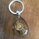 Real ammonite keyring set in resin