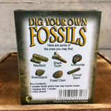 Dig Your Own Fossils - Small pack